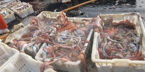 Dynamique spatio-temporelle et biologie du poulpe (Octopus vulgaris) dans les eaux mauritaniennes : modélisation de l'abondance et aménagement des pêcheries