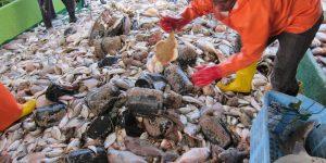 Rapport 8ème Groupe travail IMROP Evaluation des Ressources, Aménagement des Pêcheries