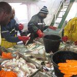 Rapport du 5ème Groupe de travail de l'IMROP sur l'évaluation des stocks et aménagement des pêcheries de la ZEE mauritanienne