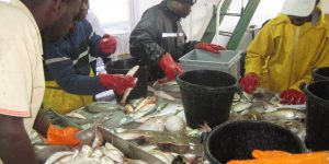 Groundfish assemblages diversity in upwelling ecosystems : insights from the Mauritanian Exclusive Economic Zone